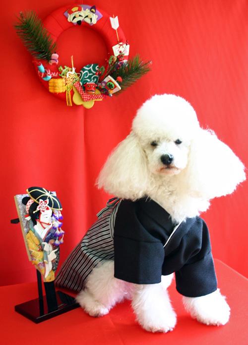 愛犬の着物袴